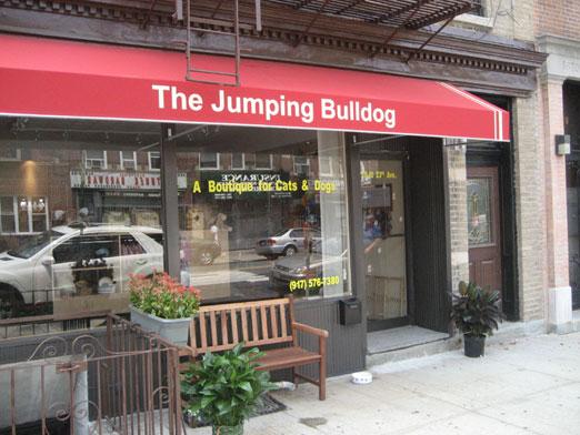 jumpingbulldog