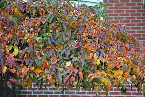 multi-color-leaves-astoria-queens