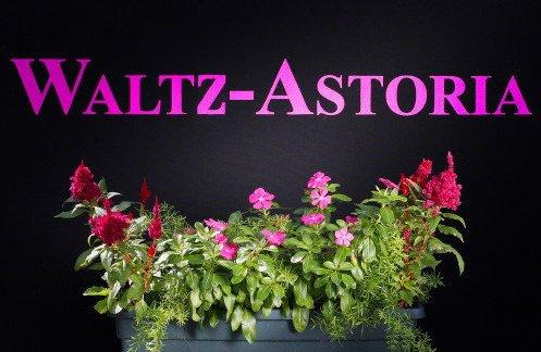 Image by Waltz-Astoria