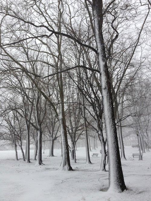 snowy-trees-astoria-queens