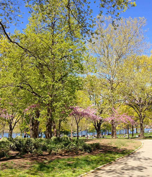 green-and-purple-astoria-park-queens