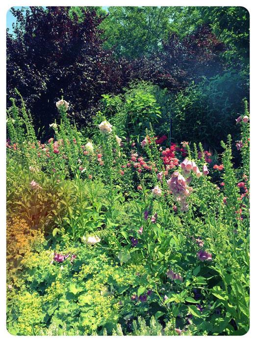 flowers-socrates-sculpture-park-astoria-queens