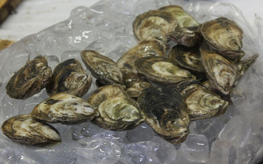 oysters-queens-county-market-singlecut-astoria-queens