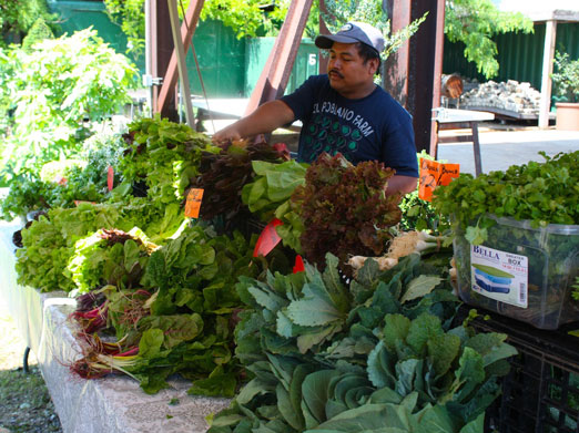 socrates-greenmarket-el-poblano-farm-astoria-queens