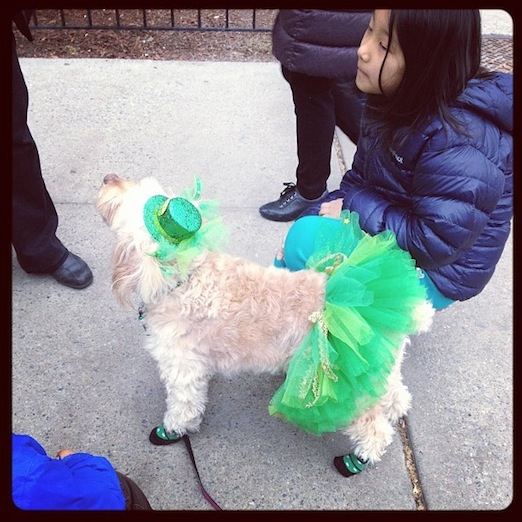 pup-st-pats-for-all-sunnyside-queens
