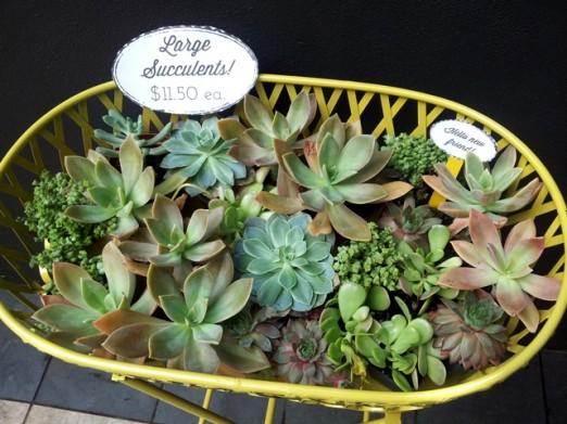 succulents-lockwood-secret-garden