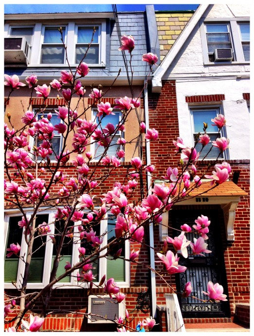 Clearly, Astoria Haiku loves spring trees as much as we do.