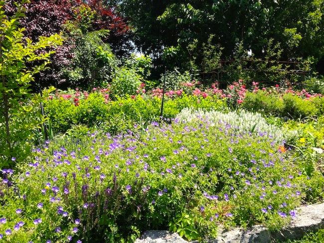beautiful-spring-flowers-garden-socrates-sculpture-park-astoria-queens
