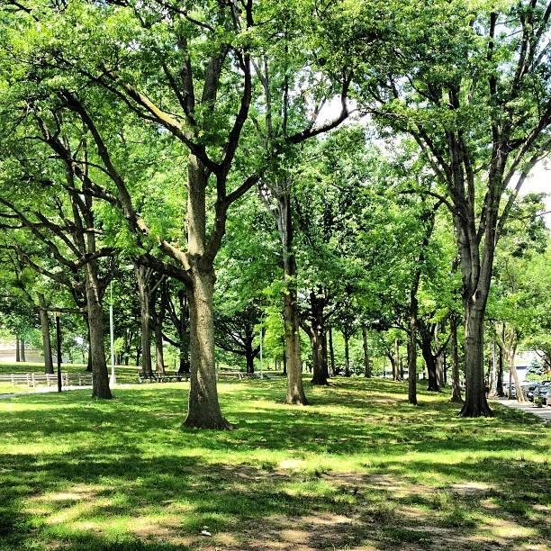 green-astoria-park-queens