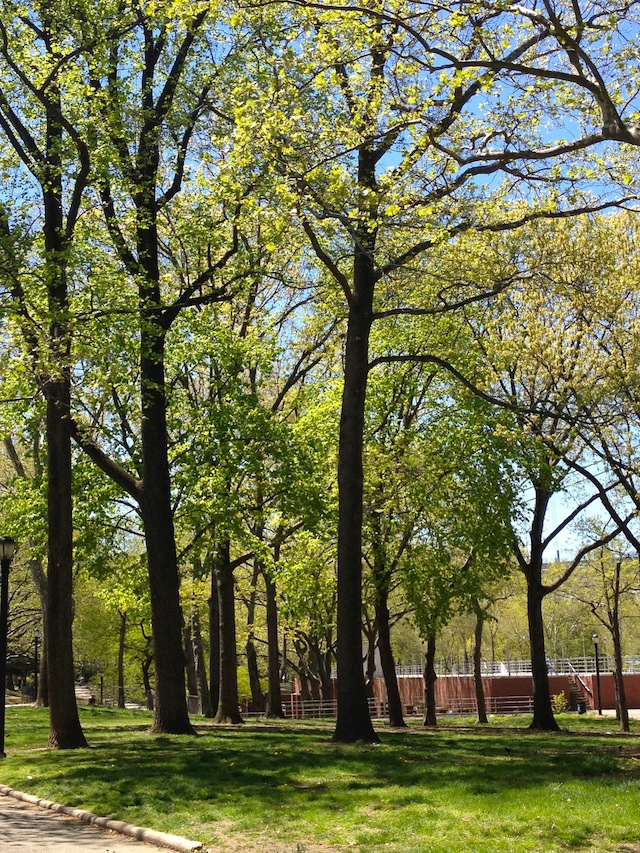 tall-green-trees-astoria-park-queens