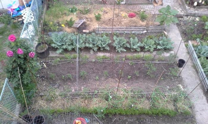 hellgate-farm-astoria-queens
