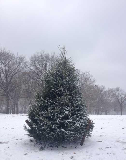 astoria-park-christmas-tree-queens