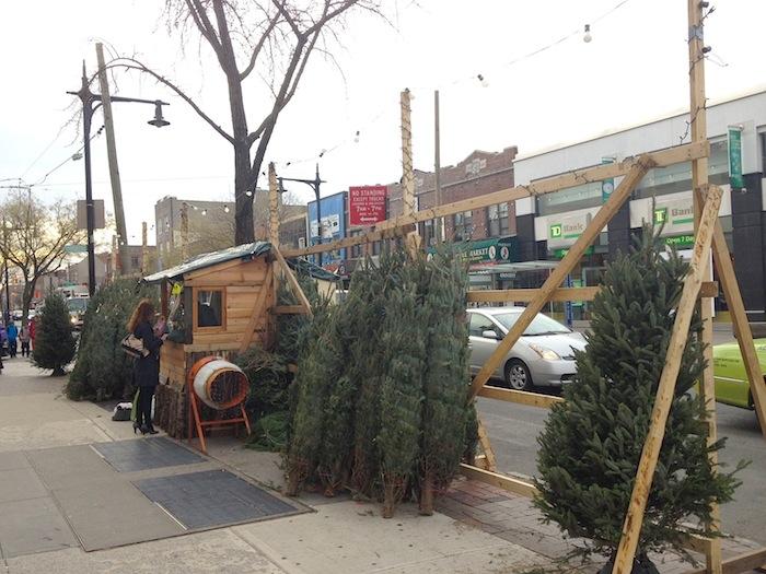christmas-trees-ditmars-2014