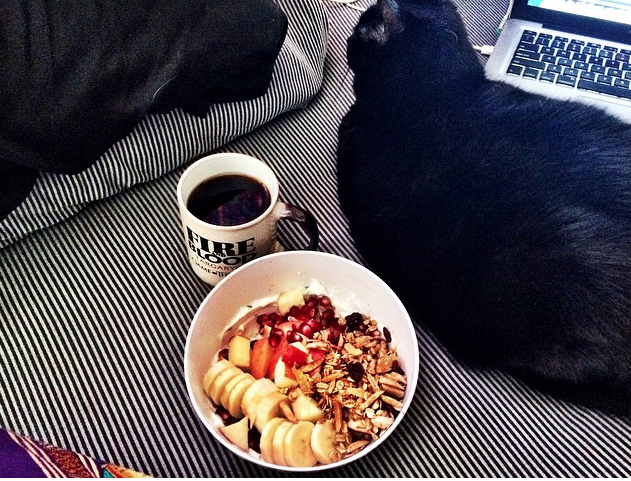 Cat is enjoying a healthy breakfast before spending a lazy day surfing the web. Photo Credit: Alex Graves