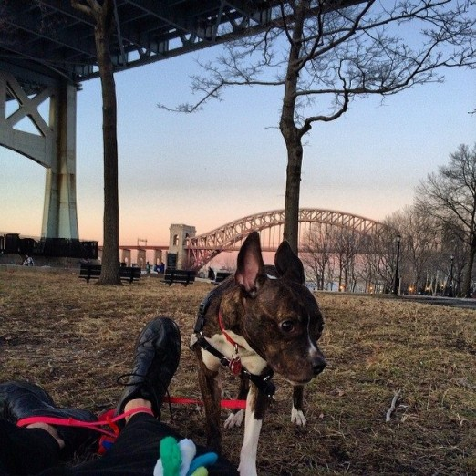 Gizmo loves hanging out in Astoria Park! Photo Credit: Michelle Stein