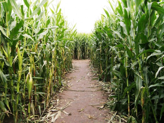 bowery-bay-corn-maze-best-of-halloween-we-heart-astoria-queens
