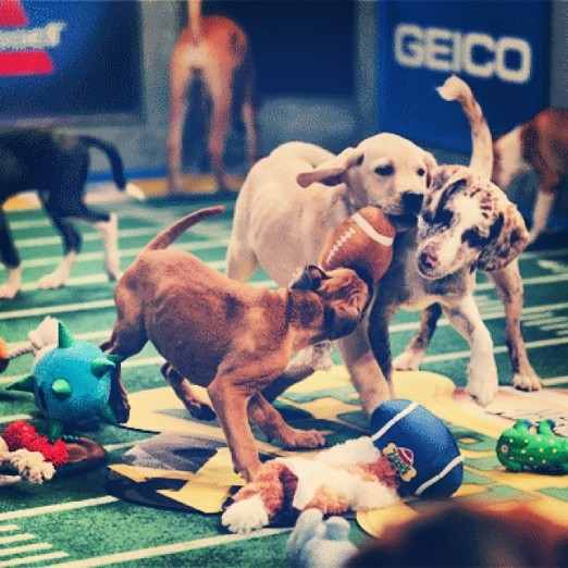 puppy-bowl-old