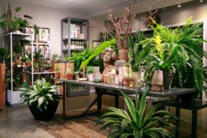 Petals & Roots Storefront
